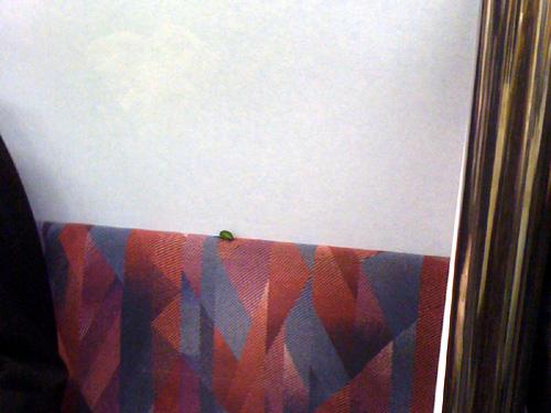 電車内の虫の写真