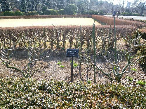 フランス式整形庭園