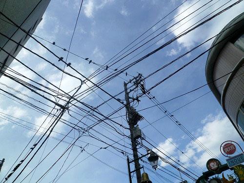 電線の上の鳩