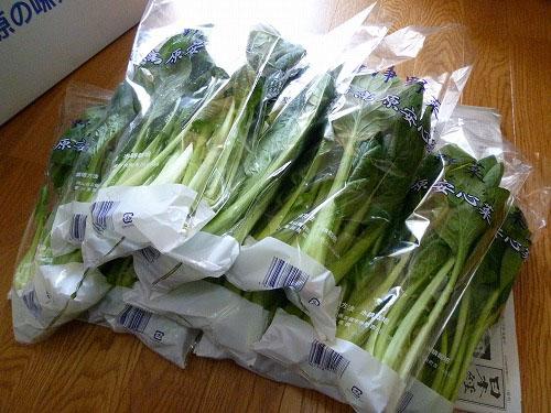 小松菜11束