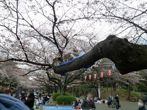 桜の木の上に・・